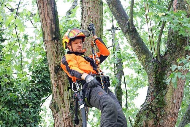 So arbeitet ein Baumpfleger