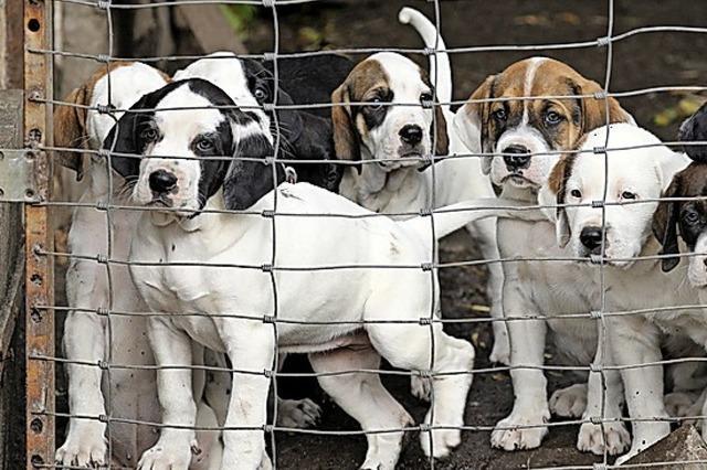 Ritter, Hunde und vergessene Turnbeutel? Unsere Tipps fürs Wochenende