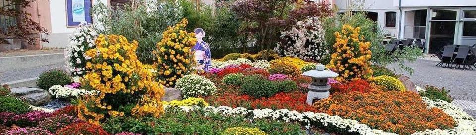 Die Chrysanthema Lahr 2019