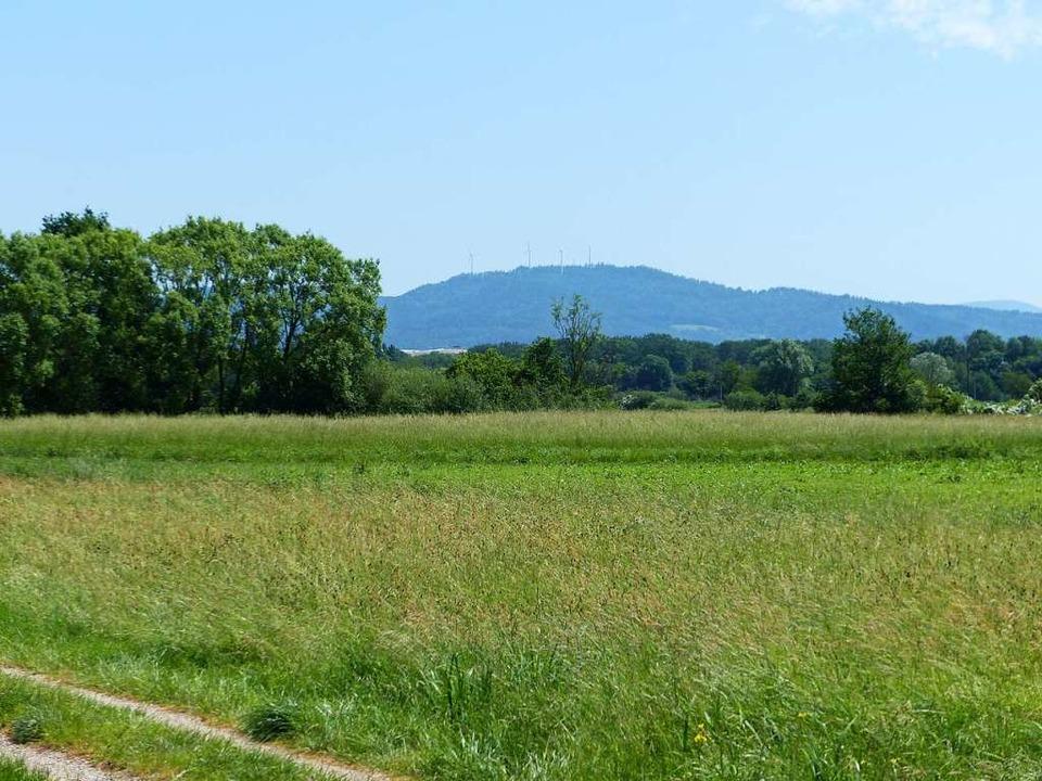 Das Neufeld bei Holzhausen, wo nach de...ates ein Gewerbegebiet entstehen soll.  | Foto: Claudia Bachmann-Goronzy