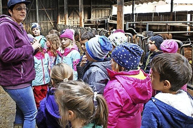 Grundschüler erleben Kälbchengeburt mit