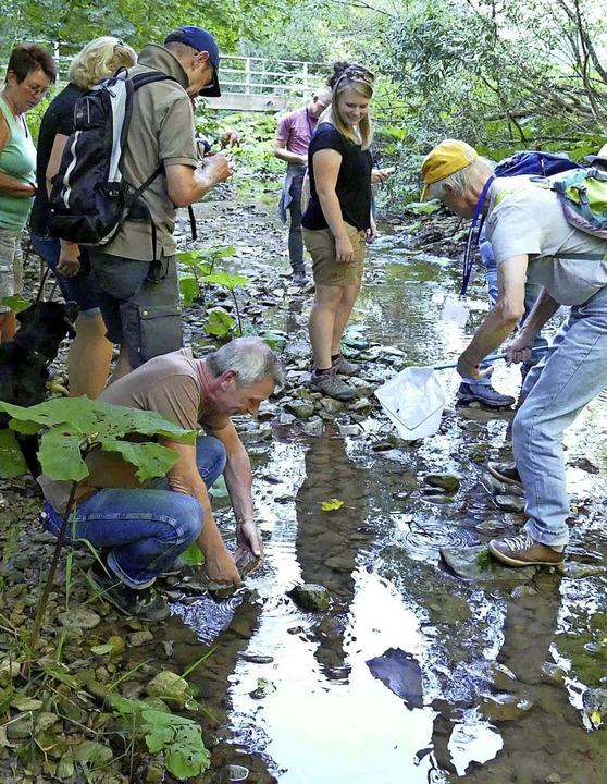Wie man erfrischende Naturerlebnisse  ...er Ausbildung an Gauchach und Wutach.     Foto: WBW