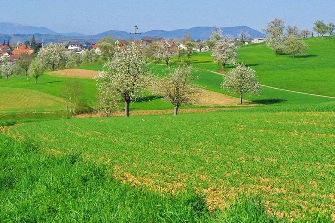 Streuobstwiesen könnten zur Zeit der B... für den Tourismus auf dem Dinkelberg.  | Foto: Rolf Reißmann