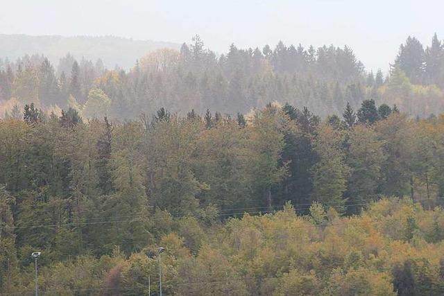 Borkenkäferbefall lässt Preise für Fichtenholz rapide sinken