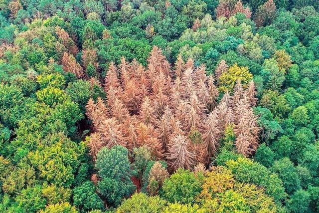 Der Klimawandel macht den Wäldern im Landkreis Lörrach enorm zu schaffen