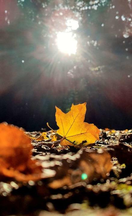 Ein herbstlich verfärbtes Blatt liegt im Wald in der Sonne.    Foto: Patrick Seeger (dpa)