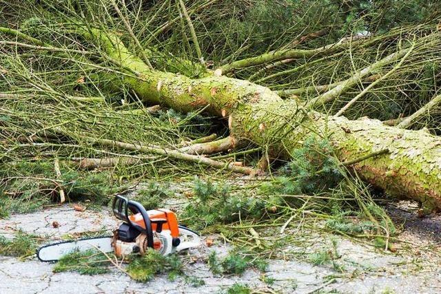 10 Meter hoher Baum stürzt auf geparktes Auto in Weil am Rhein