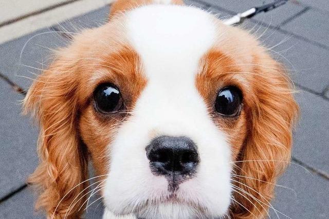 Veterinäramt holt 31 Hunde aus Hundepension in Steinen