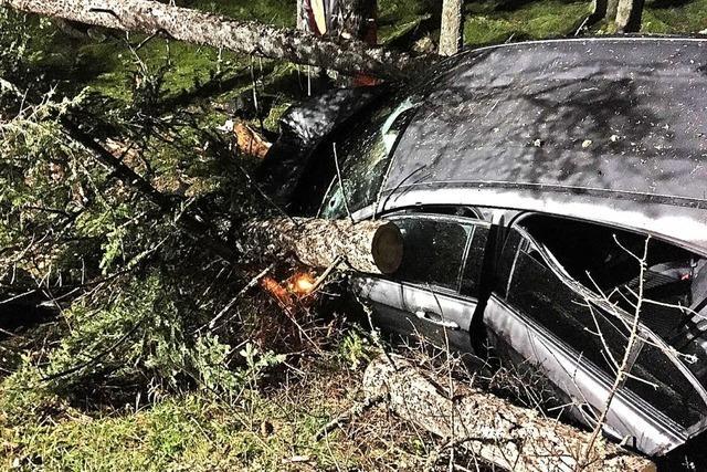 Baum stürzt auf Auto
