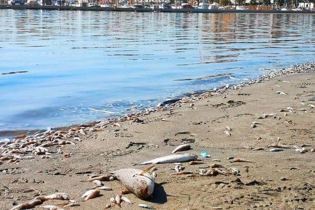 Spaniens Mar Menor steht vor dem Kollaps