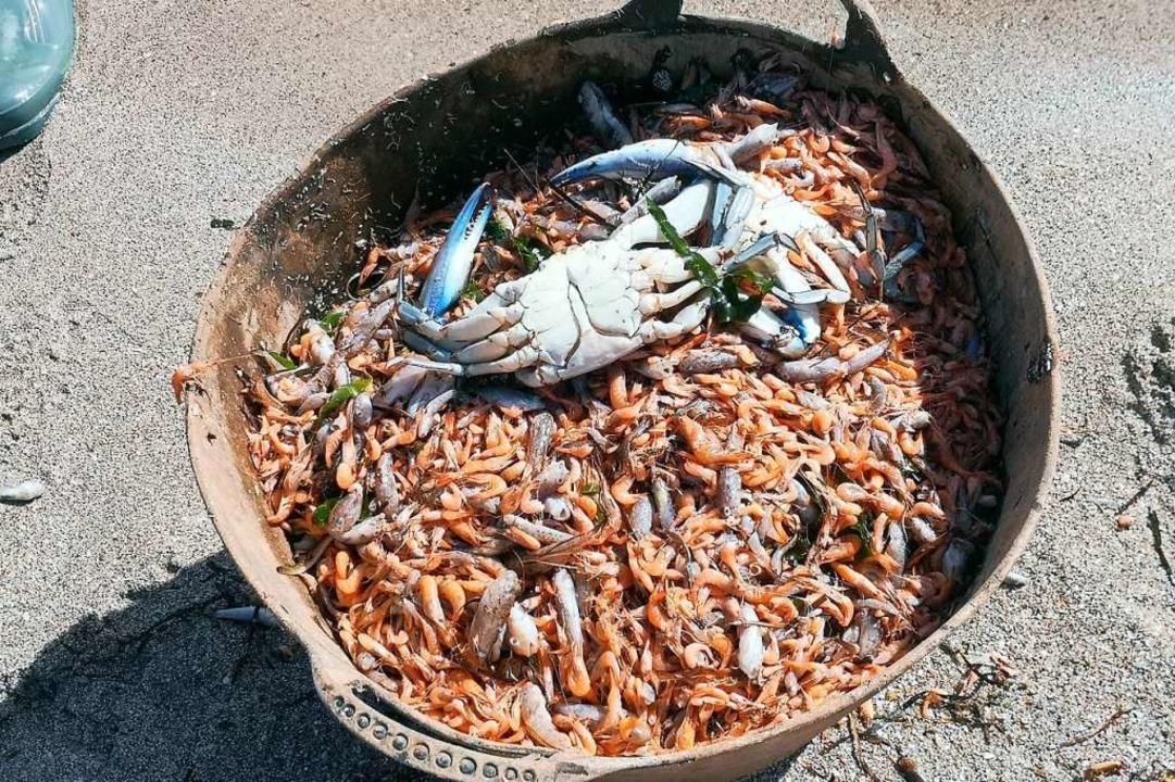 Tote Fische, Garnelen und Krebse, die ...t wurden, befinden sich in einem Korb.    Foto: --- (dpa)