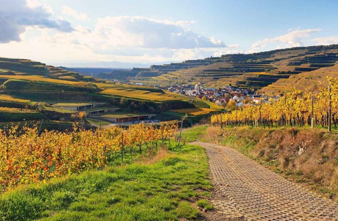Besonders im Herbst kommen viele Touristen an den Kaiserstuhl.  | Foto: Hans-Peter Ziesmer