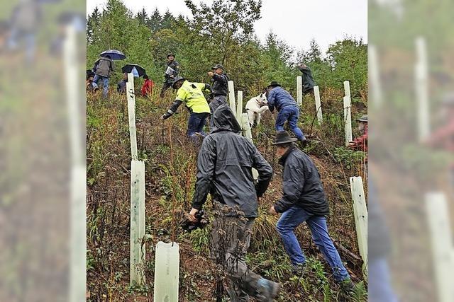 Rund 30 Bürger blicken auf Wald