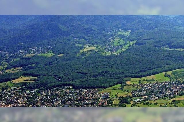 Wie geht's weiter mit dem Eichwald?