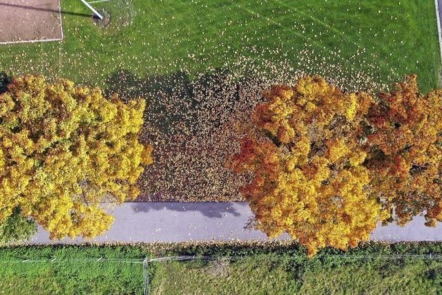 Der Herbst von oben