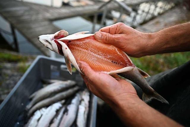Genossenschaft will Fische in einer Aquakultur züchten