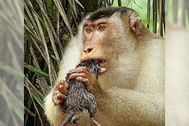 Lieber Affen statt Gift