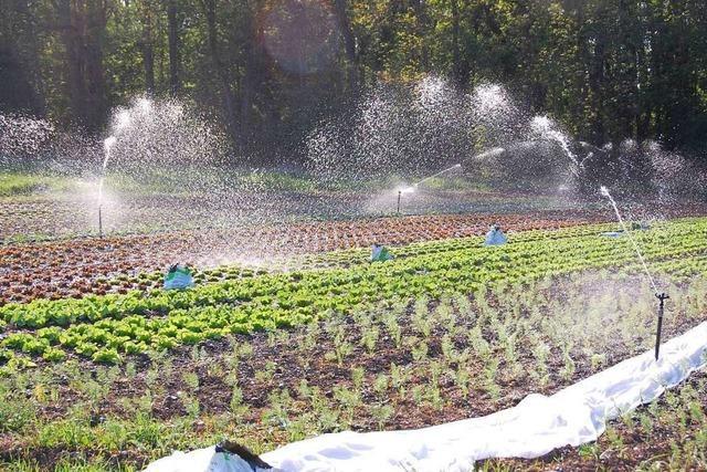 Der Wasserverbrauch pro Kopf in Weil am Rhein steigt an