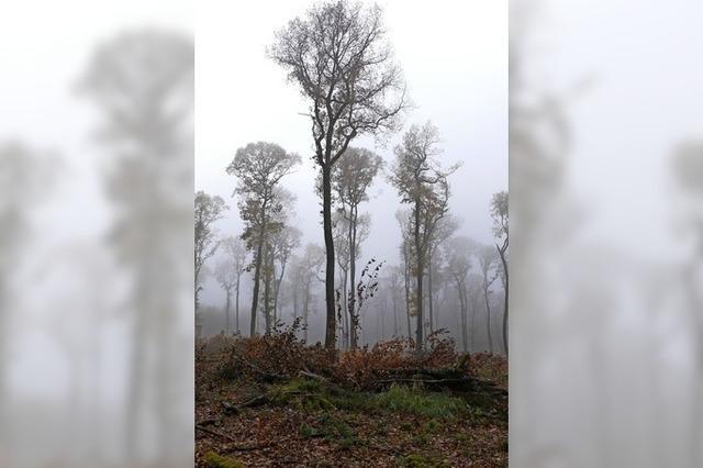 Forstwirtschaft wird gebremst