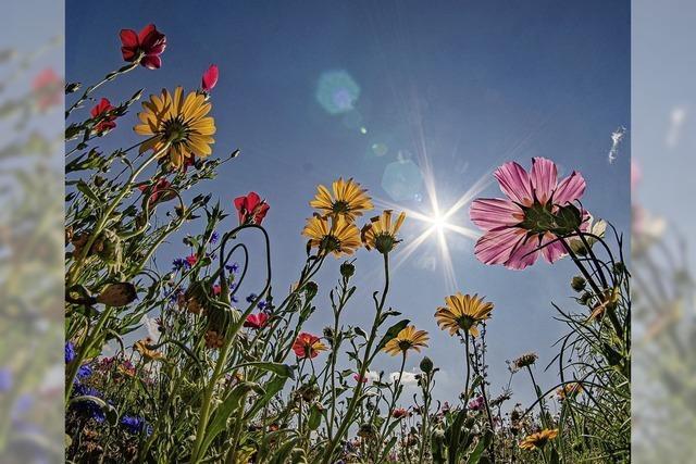 Blühwiesen für Artenschutz