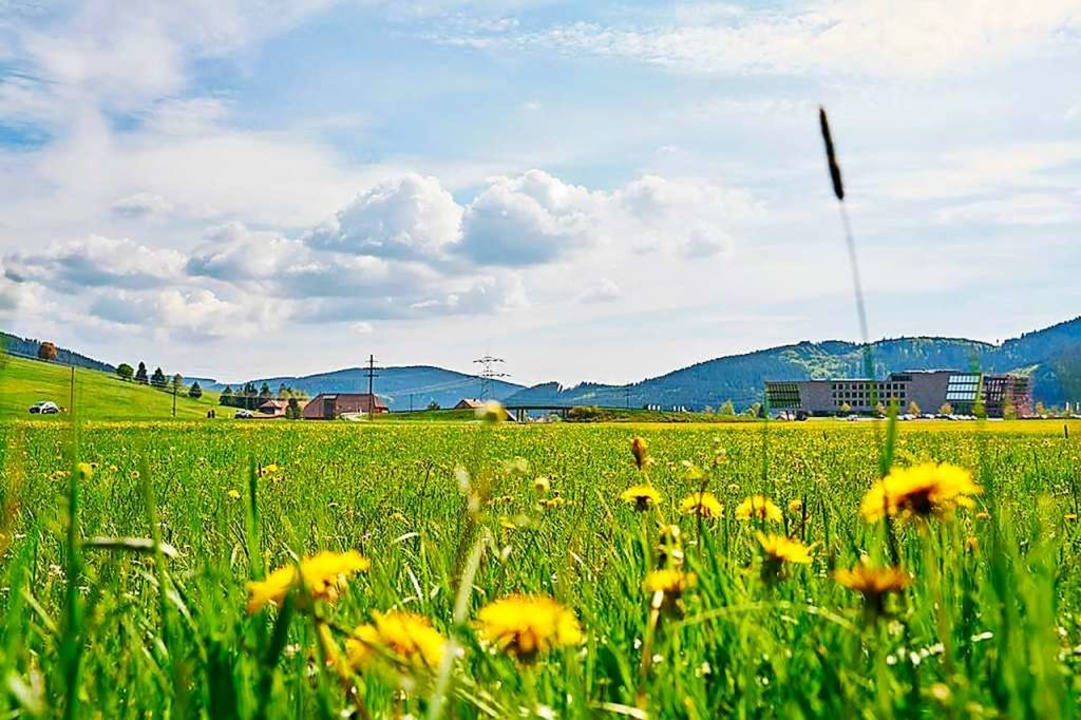 Auf diesem Grundstück an der B 31 in T...aktur der Schwarzwaldmilch entstehen.     Foto: Schwarzwaldmilch