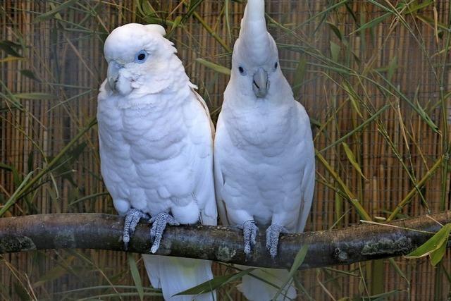 Ausstellung der Vogelfreunde Emmendingen