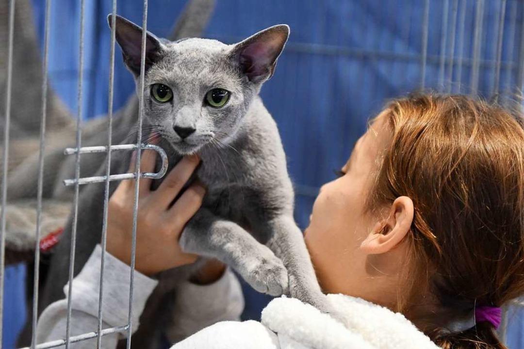 1467 Katzen wurden ausgestellt.  | Foto: Rita Eggstein