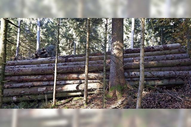 Käferholz wird immer mehr