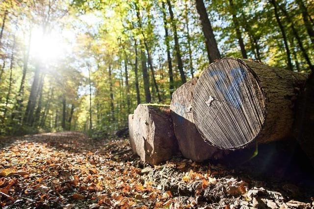 Schäden an allen Baumarten überall in Baden-Württemberg