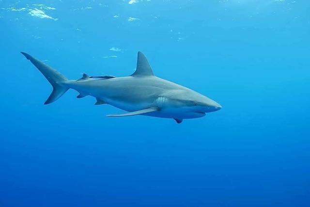 Hai beißt 28-jährigem Briten den Fuß ab
