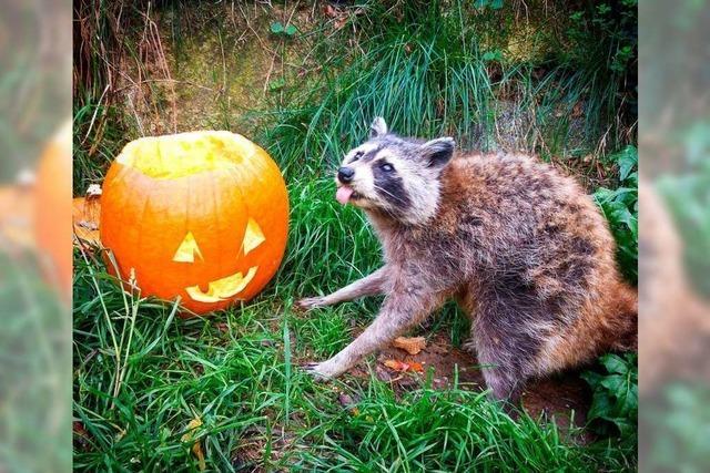 Halloween im Schwarzwaldzoo Waldkirch