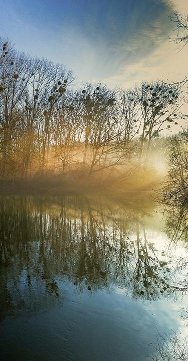 Magie des  Nebels: unterwegs  in den Rheinauen  | Foto: christine - stock.adobe.com