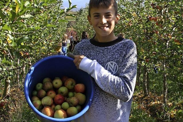 Ein Besuch beim Obstbauern