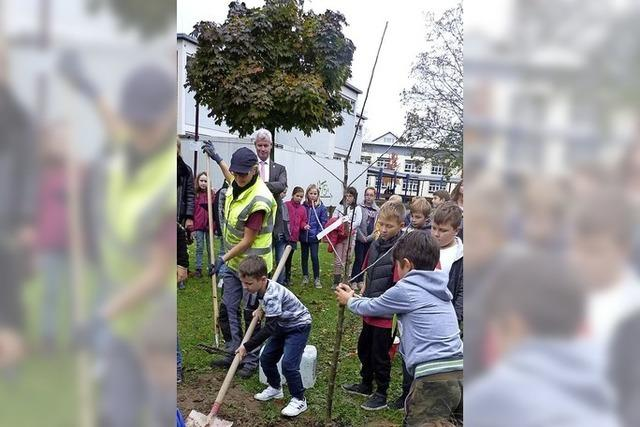 Schüler pflanzen an der Schule einen Apfelbaum