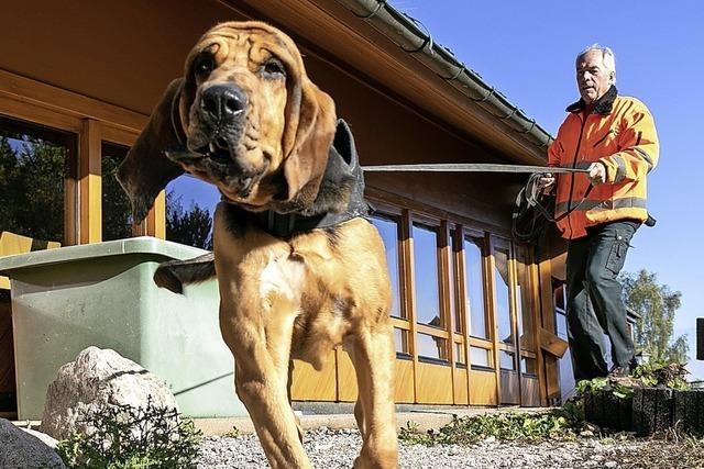 In Höchenschwand lernen Bluthunde, wie man Menschen aufspürt