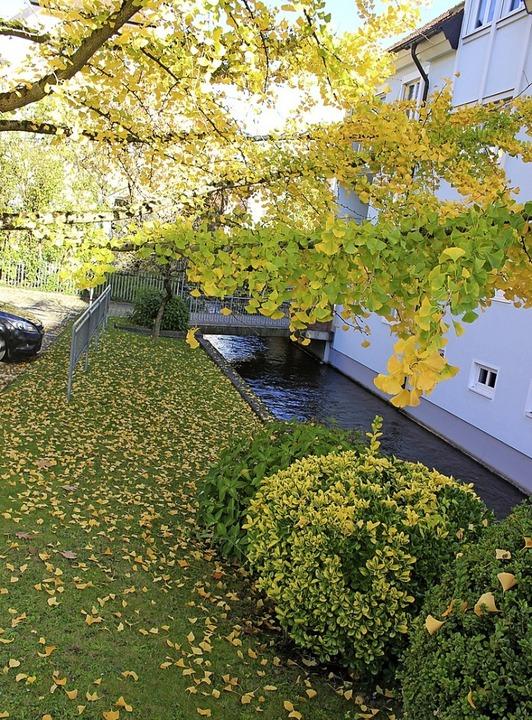 Blätterzauber  am Gewerbekanal   Waldkirch.     Foto: Bernd Fackler