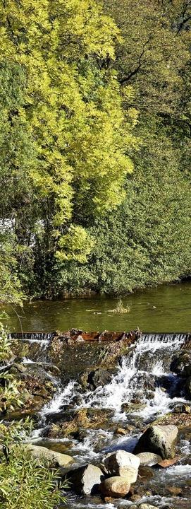 Noch ist das Laub ziemlich grün an der  Wilden Gutach in Simonswald.    Foto: Horst Dauenhauer