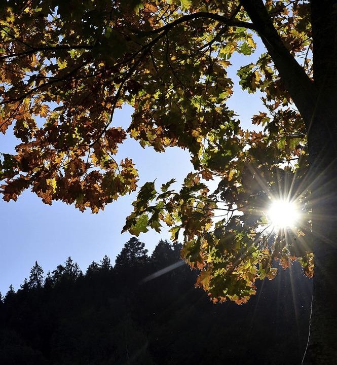 Der Sonnenstrahl direkt durch die Eiche.    Foto: Horst Dauenhauer