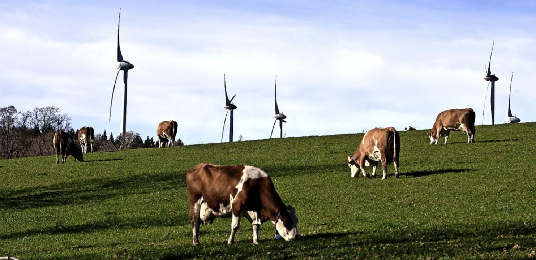 Auch die Vierbeiner auf der Weide auf der Platte  genossen die Herbstsonne.    Foto: Horst Dauenhauer