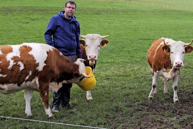 Glückliche Kühe tun der Natur gut