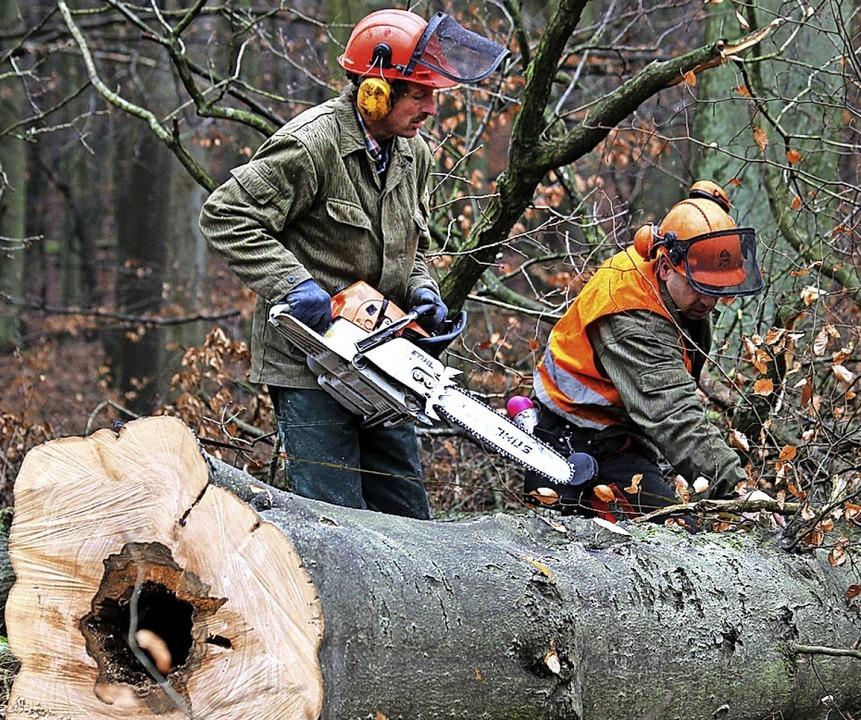Der Holzeinschlag rechnet sich.  | Foto: Bernd Wüstneck