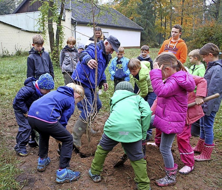 Einen Feldahorn haben Jugendliche aus ...lände des Schützenvereins gepflanzt.    | Foto: Adelbert Mutz