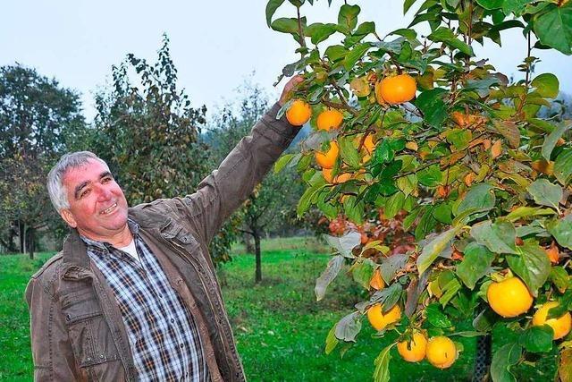 Staufener Bioobstbauer zeigt, wie Landwirtschaft ohne Spritzmittel aussehen kann