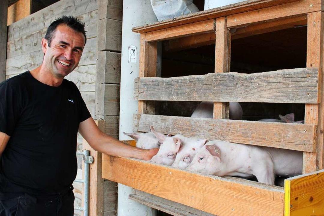160 Schweine leben bei Bernd Hug auf dem Hof.    Foto: Annika Sindlinger