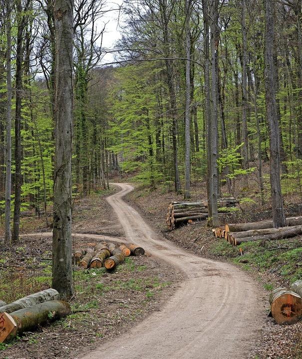 Weiter umstritten: die Forstwirtschaft im Eichwald.  | Foto: Volker Münch