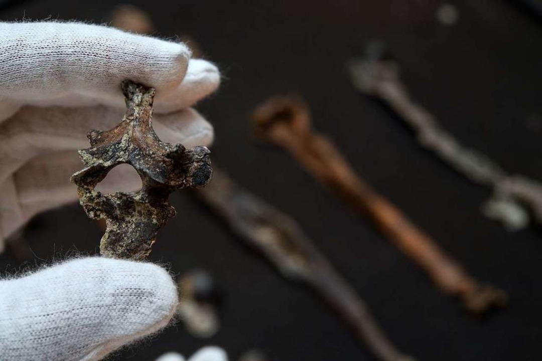 Evolution - Der erste aufrecht gehende Menschenaffe kam aus dem Allgäu