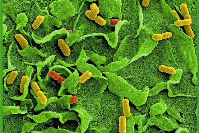 Der Kampf gegen die Bakterien