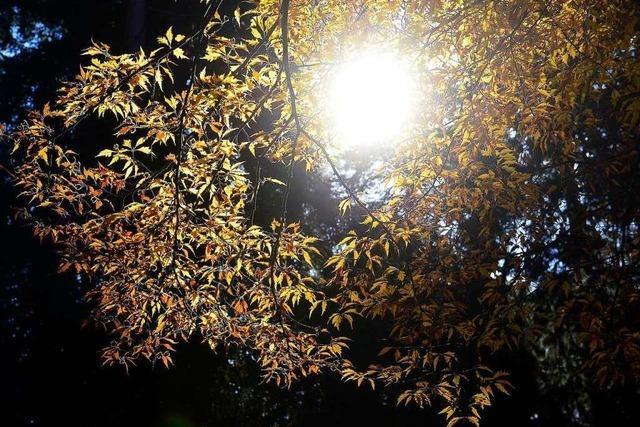 Der Oktober in Freiburg war golden - mit kleinen Abstrichen