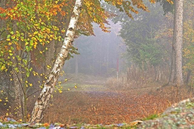 Ein Torblick zum mystisch verzauberten Wald