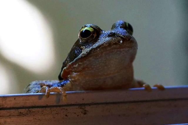 Frosch guckt in Badezimmer in Betzenhausen